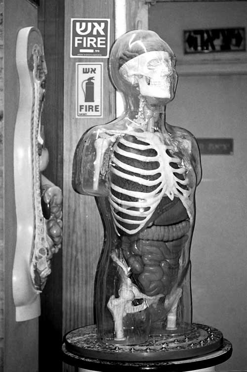 nature-skeleton