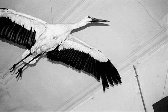 nature-stork-s