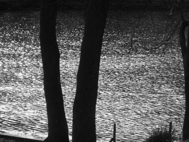 100_9296 деревья